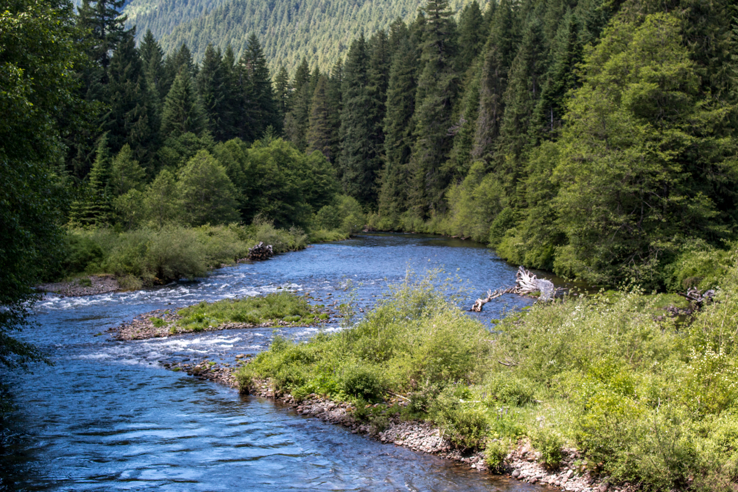 Miles of prime spawning habitat lies inaccessible to Wild Spring Chinook in the upper North Santiam Basin